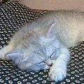 Моя Кшися ну о-о-очень любит спать!