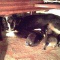 Динка с щенками