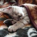 Барсенок сладко спит (ему тут 2 месяца)