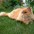 Том очень любил дачу,   а в ярко-зеленой траве смотрелся ярко и солнечно