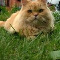 Том,   Томушка,   Котомка,   Котомство,   Котуся,   Наша Драгоценность,   Ваше Котейство - так мы обращались к нашему любимому коту Тому