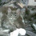 Вдвоём спать теплее...