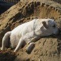 Собак спит-служба идёт...На сопке.