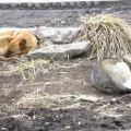 Собачки живущие у рынка в Уфе.Оставшиеся в живых - остальных отстрелили. Храни их Господи от рук жестоких людей и от колес автомобилей.