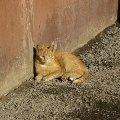я на солнышке сижу...<br /> котик живущий в подвале..все живое любит солнышко...