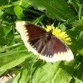 Бабочка!   :))