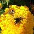 Цветочек и пчелка