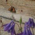 Бабочка-красавица!