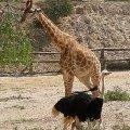 Однажды в Африке