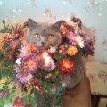 Цветочный кот.