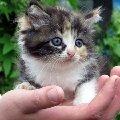 Котенок Нюша