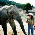 """Слон наволе- вовсе не такое уж доброе животное,   как в цирке!   А главное,   в непосредственной близости слон в Национальном Парке \""""Айтана\"""" куда страшнее,   чем слоны из зрительских мест на представлениях!"""