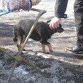 Бедная собачка. Её бросили.