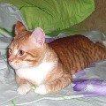 Рыжуля разлегся на кроватке!