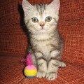 Мой котенок Иннокентий!