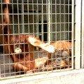 в зоопарке в г.Бохуме.