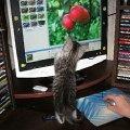 Яблочки бы немного поярче!