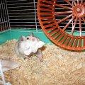 Масяня готовит гнездо к рождению малышей