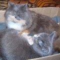 Маша с Дымкой вместе растили котяток.