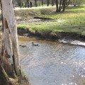 кто там плавает)))))