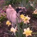 Хороши весной в саду цветочки!
