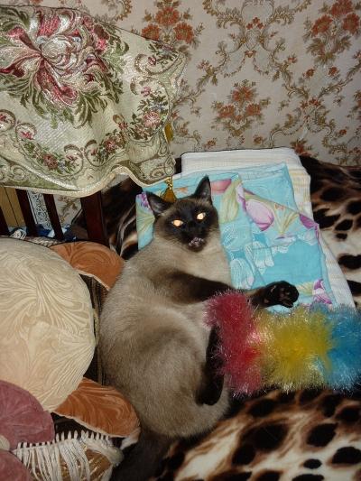 Кот не может пописать что делать в домашних условиях, первая помощь 47