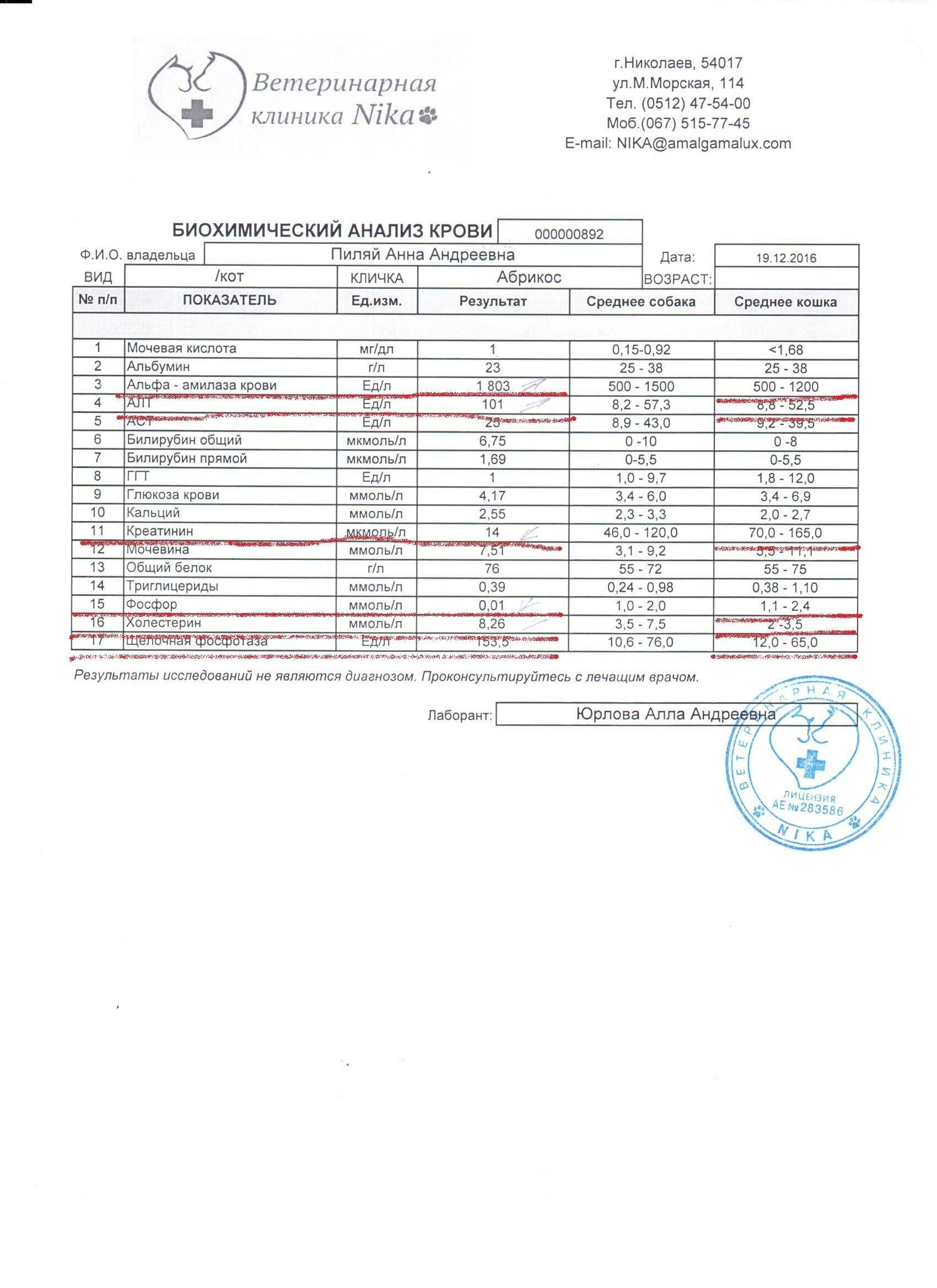 Ответ общий клинический анализ крови у котов Справка для выхода из академического отпуска Шелепихинское шоссе