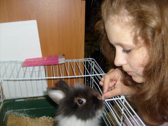 Зайка Кролик декоративный