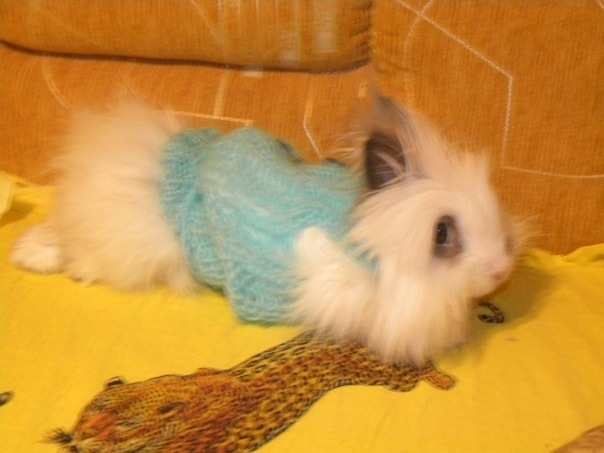 Яша Кролик