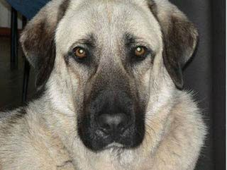 собаки фото и породы и описание