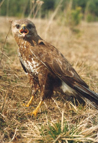 Птицы виды диких птиц фото и описание