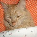 Федя спит.