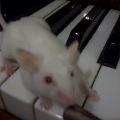На пианино)))