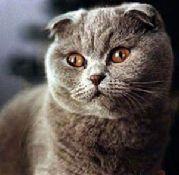 Каталог пород кошек, виды кошек, фото и описание.