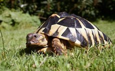Сухопутные и водные черепахи: содержание и уход