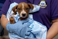 В каких случаях животному требуется скорая ветеринарная помощь?