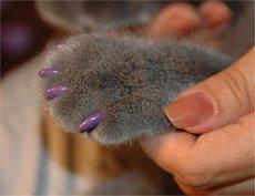 """можно подробно прочитать о  """"мягких коготках """" для кошек.  Уход за когтями: Регулярная обработка когтей, так сказать..."""
