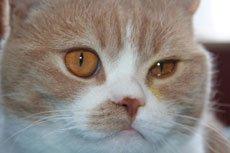 Симптомы болезни глаз кошек и собак. Первая помощь при травме глаз.