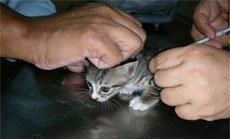 Какие бывают способы дачи лекарств животному?