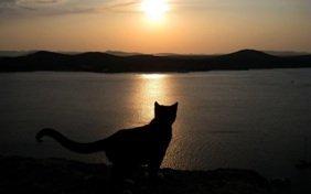 Эвтаназия животных. Гуманная эвтаназия собак и кошек на дому.
