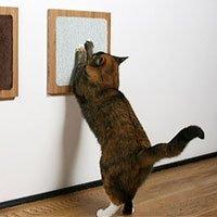Как сделать так,   чтоб кошка не царапала мебель?