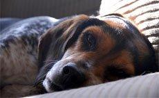 Проведение общей анестезии у мелких домашних животных. Общий наркоз