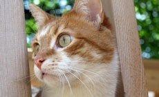 Стерилизация. Cтерилизация,   кастрация кошек - Ветеринарный центр Зоовет.