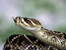 Паразиты и грибки у рептилий.