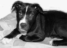 Понос  у собаки,   кошки - что делать? Лечение поноса у собак и кошек.
