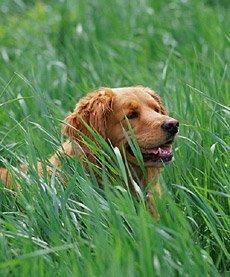 Акупунктура (иглоукалывание) собак и кошек