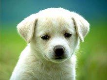 Причины заболевания собак