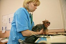 Профилактический осмотр домашних животных