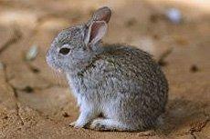 Декоративные кролики.
