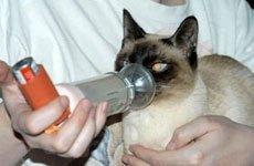 Бронхиальная астма кошек